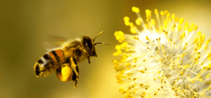 Ekoproduktas Brewers Yeast for Bee